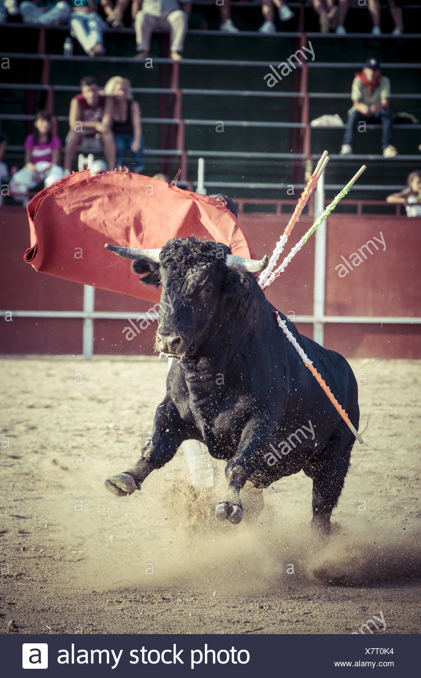 Blood, spectacle of bullfighting, where a bull fighting a bullfighter Spanish tradition - Stock Image