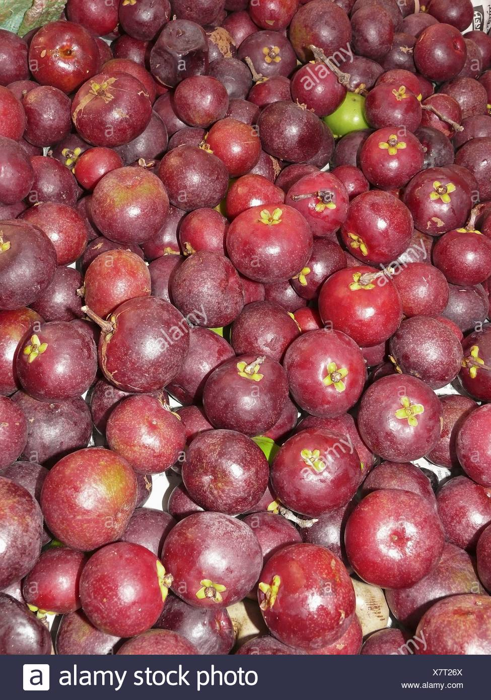 Kokum High Resolution Stock Photography And Images Alamy