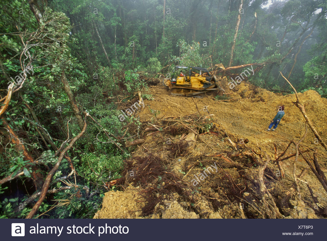 Sabah Borneo Bulldozer grading logging road in rainforest Sabah - Stock Image