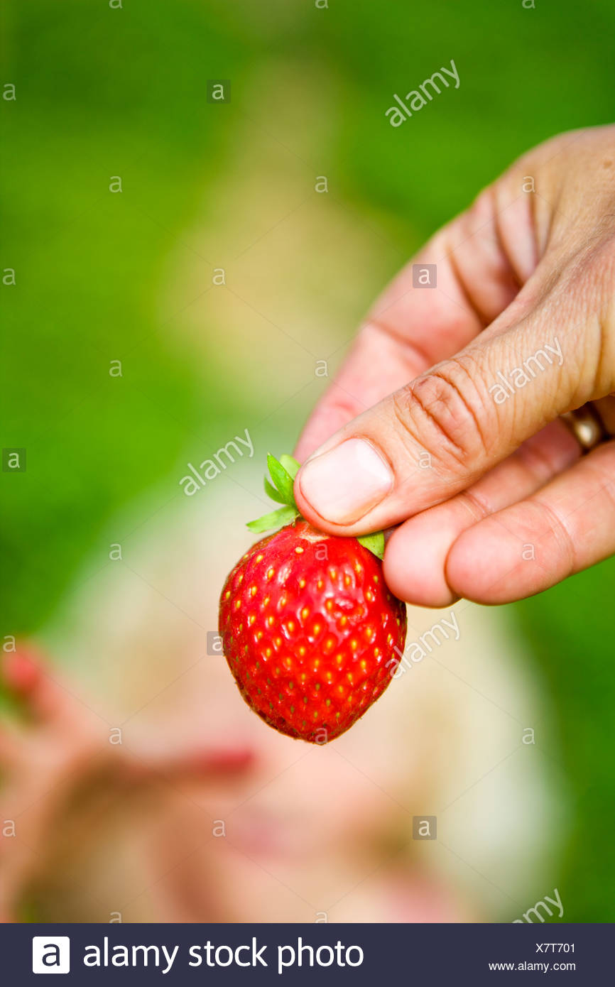Close-up of strawberry - Stock Image