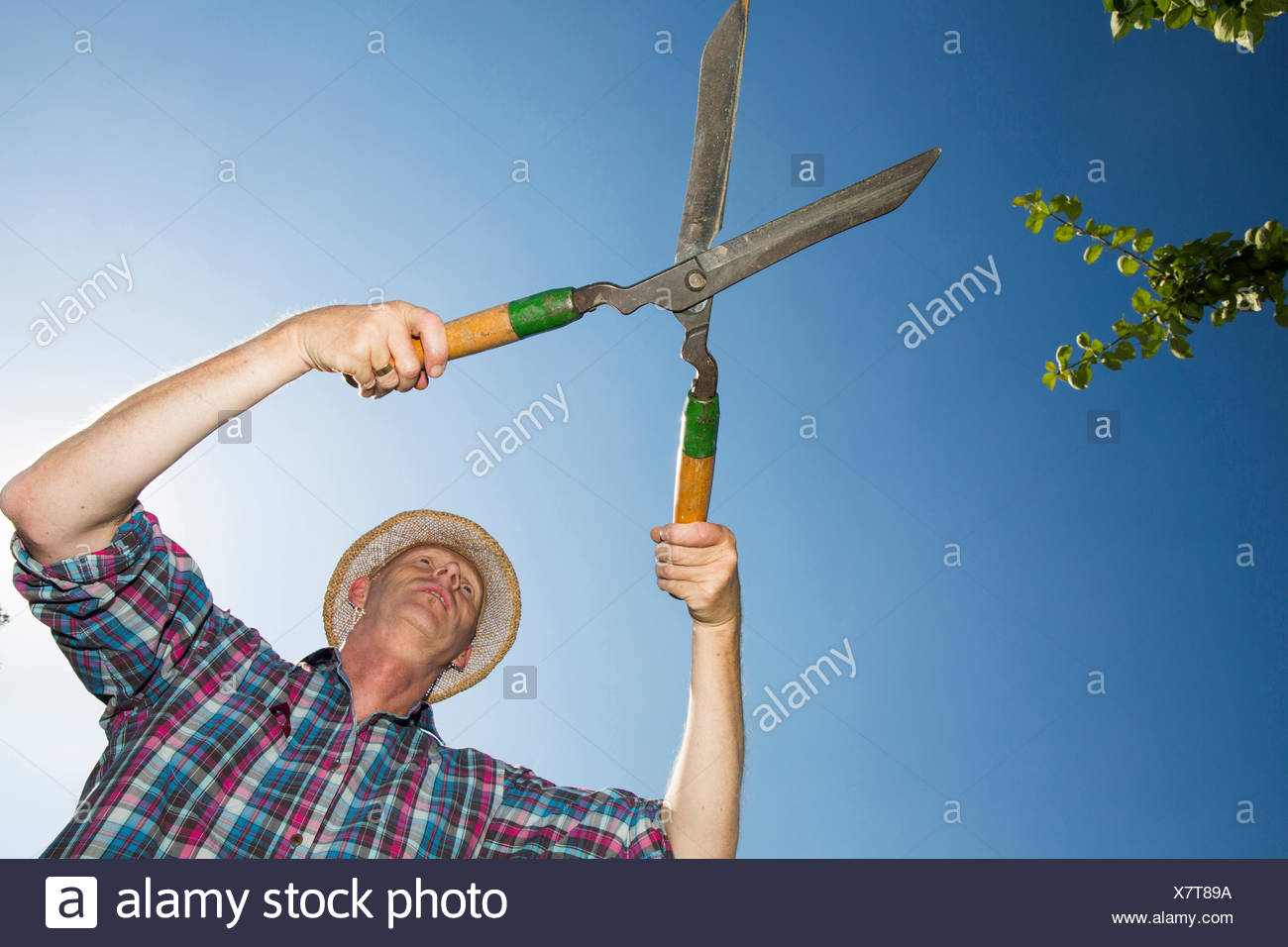Allotment gardener with hedge trimmer in front of blue sky - Stock Image