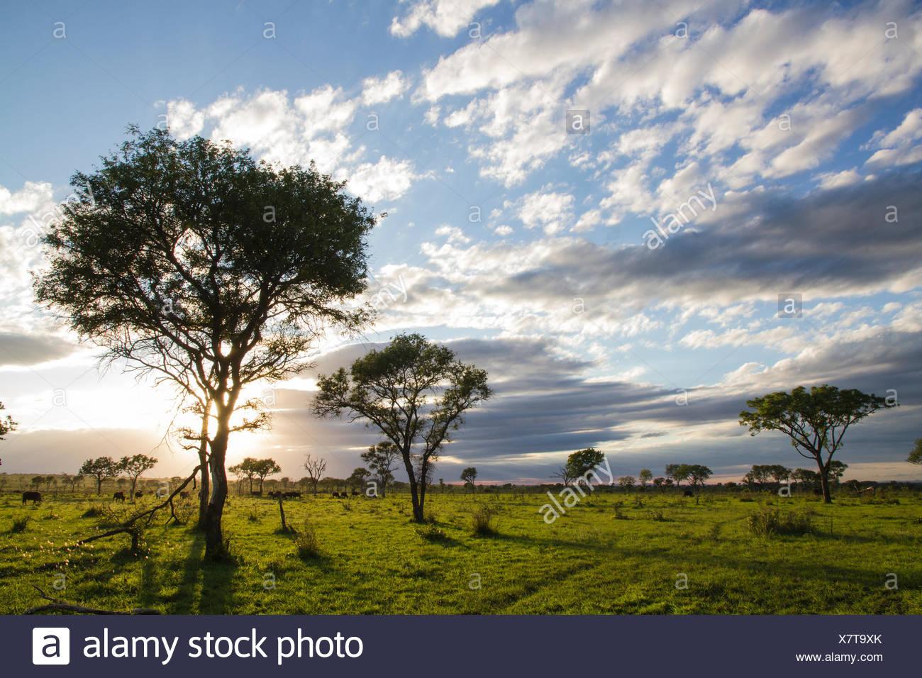 Sunrise in Londolozi, South Africa - Stock Image