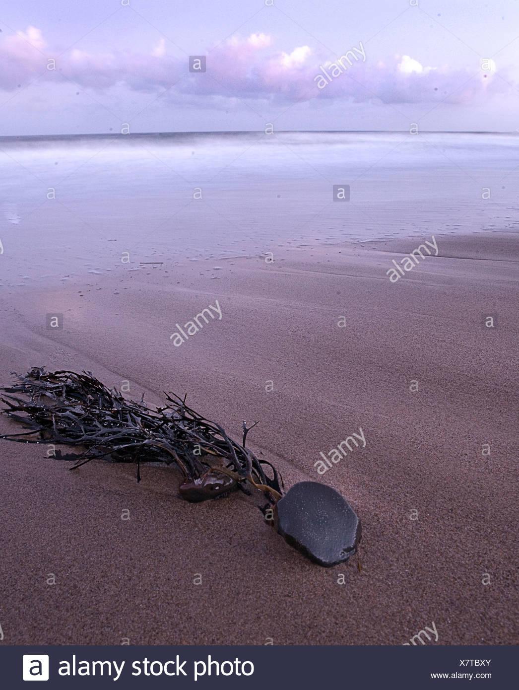 Seaweed lying on a deserted beach - Stock Image