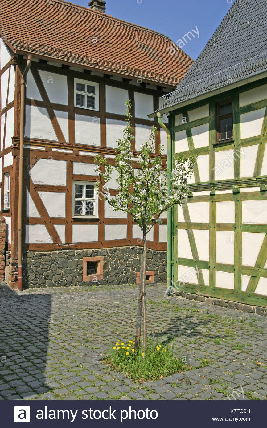 Young fruit tree in the middle of a inner courtyard surrounded with half timbered houses