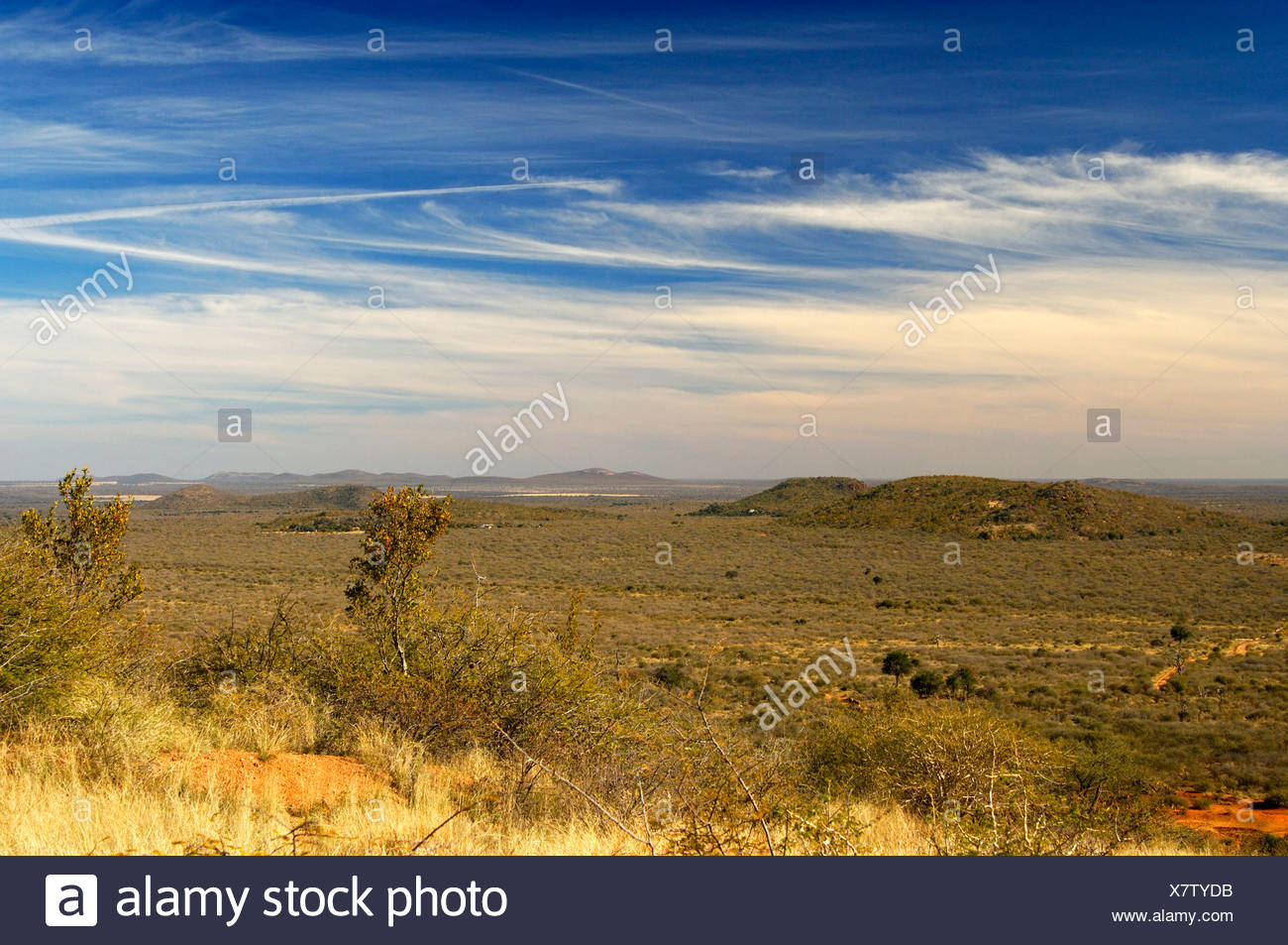 View over the vast African savannah landscape in the Madikwe Game Reserve, South Africa, Africa - Stock Image