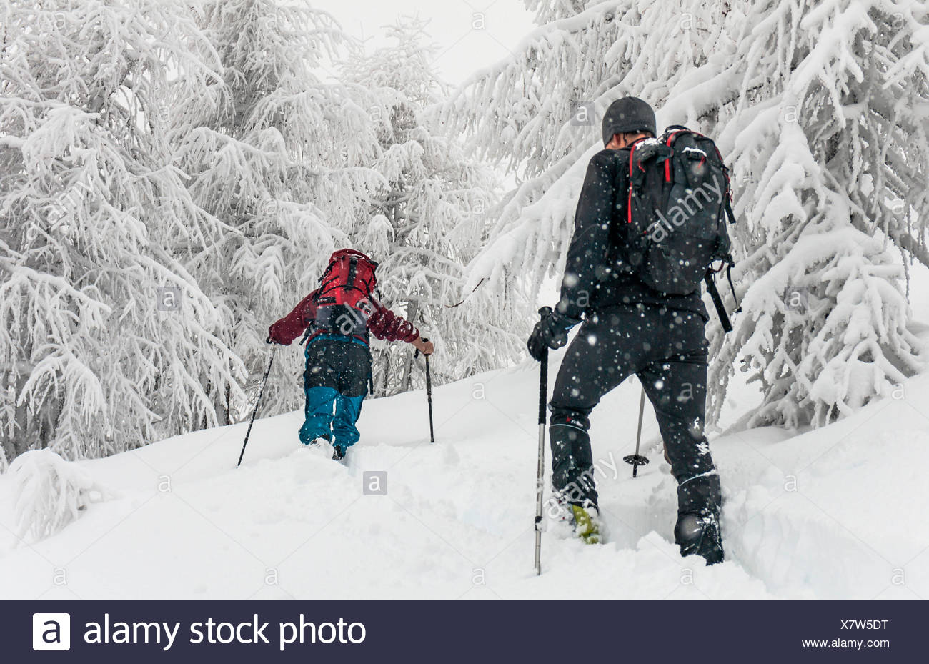 ski touring during a heavy snow fall at Cima della Rosetta,Orobie, Valgerola, Valtellina, Italy, Alps - Stock Image