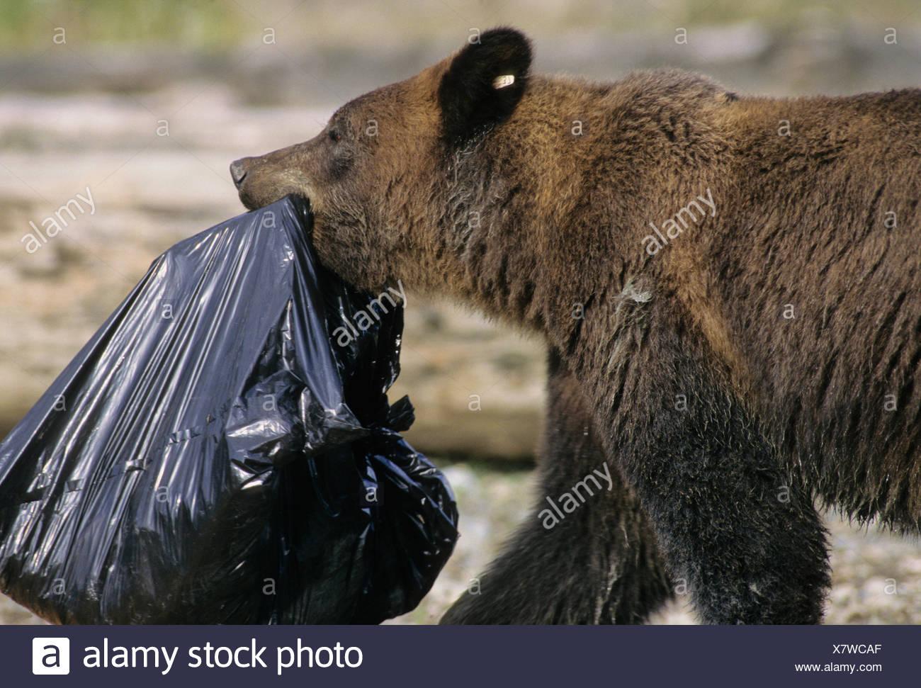 scavenge the dump stock photos & scavenge the dump stock images - alamy