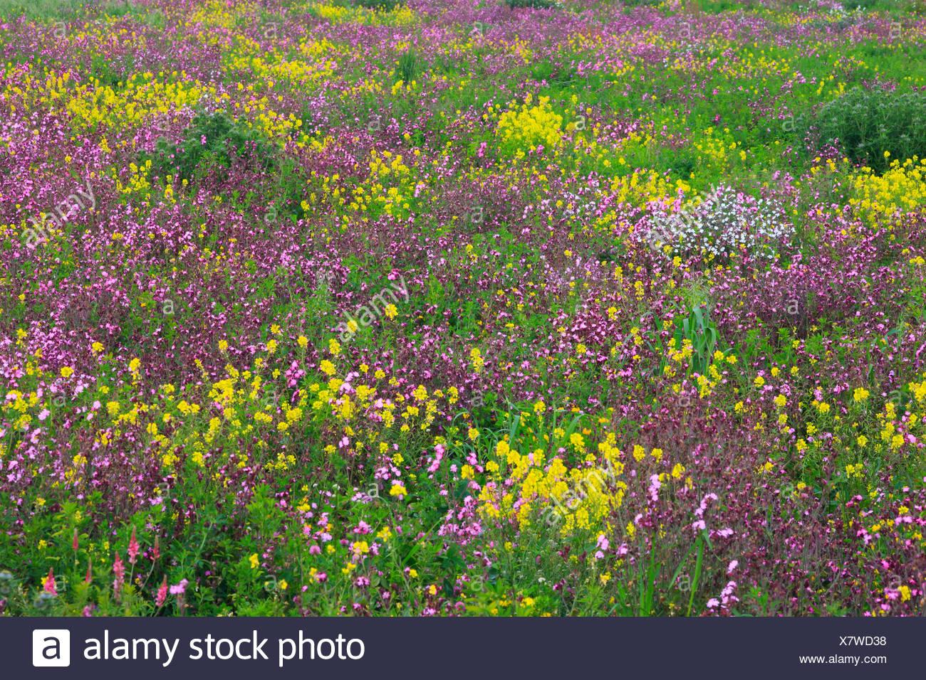 Detail flower flower meadow detail england spring spring flowers detail flower flower meadow detail england spring spring flowers spring meadow great britain europe background pattern mightylinksfo