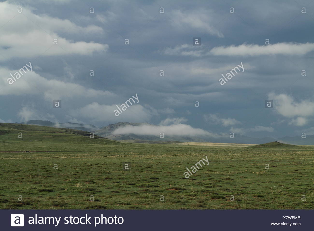 lawn green - Stock Image