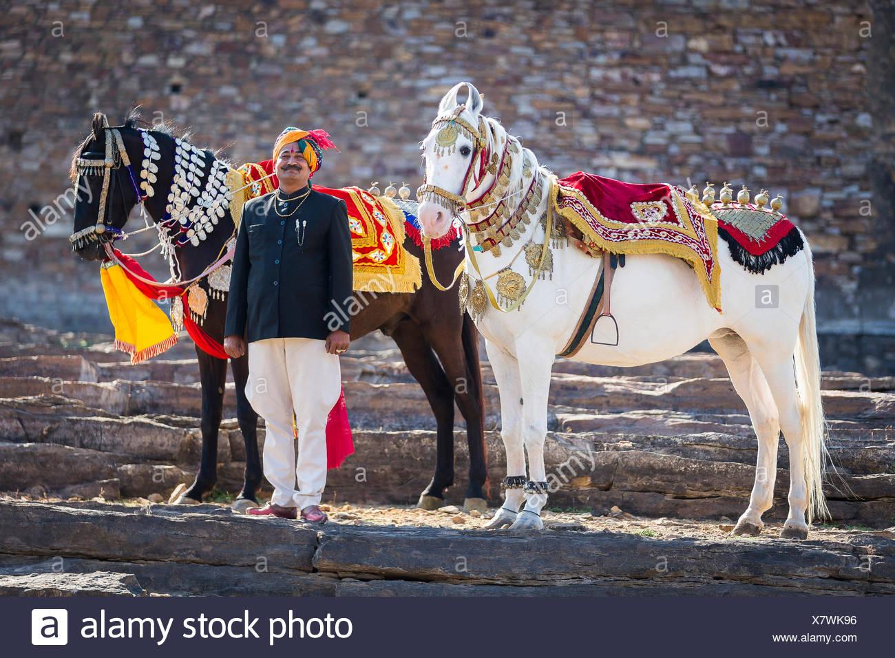 Marwari Horse. Pair of decorated dancing horses with proud owner. Rajasthan, India - Stock Image