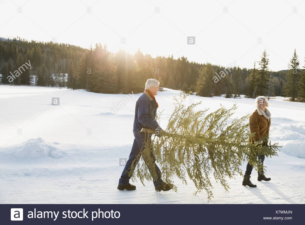 Couple carrying Christmas tree in snow - Stock Image