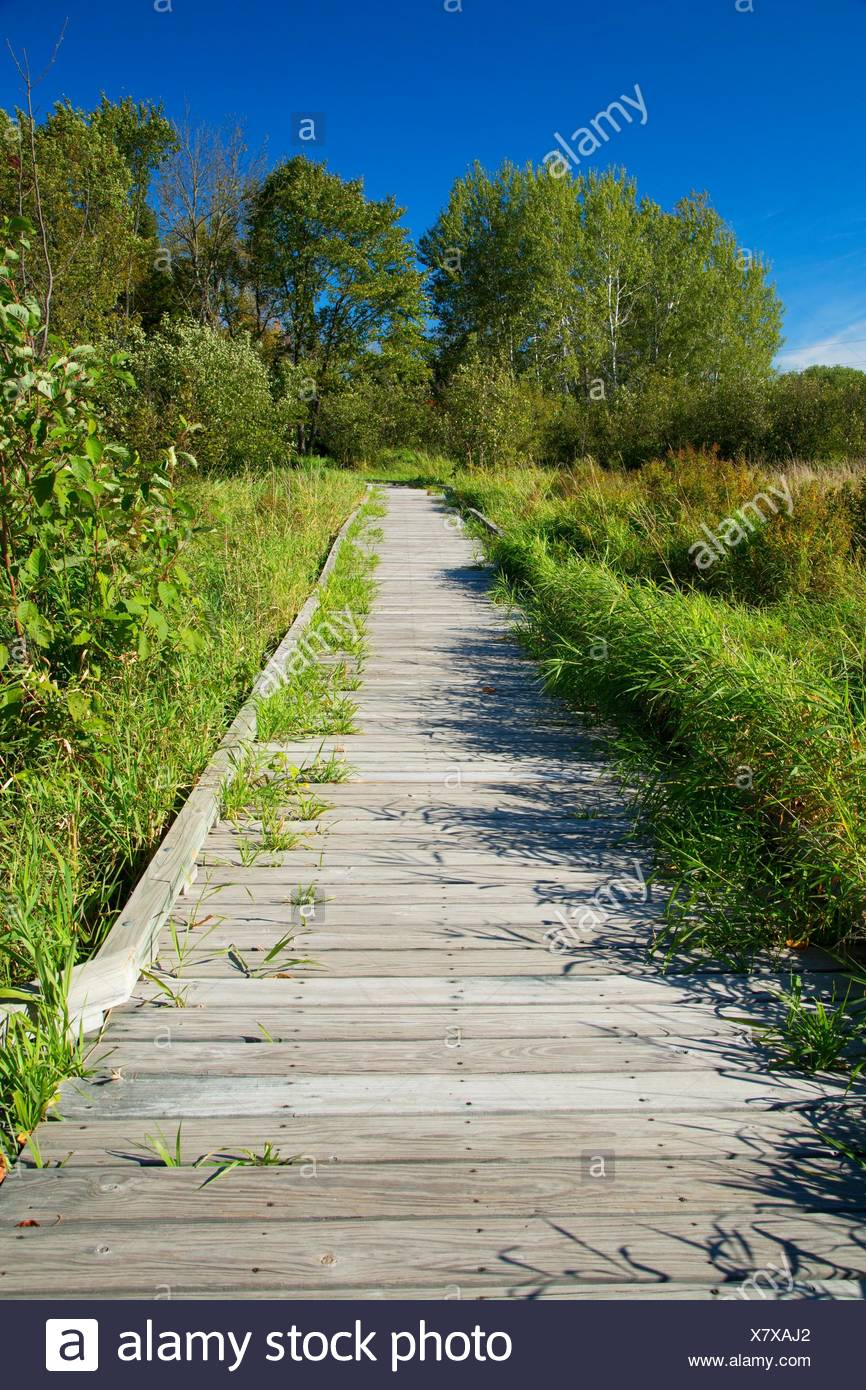 Boardwalk, Northern Great Lakes Visitor Center, Wisconsin. - Stock Image