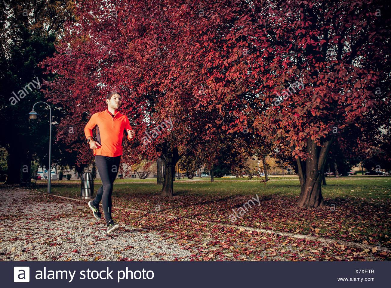 Male runner jogging in autumn park - Stock Image