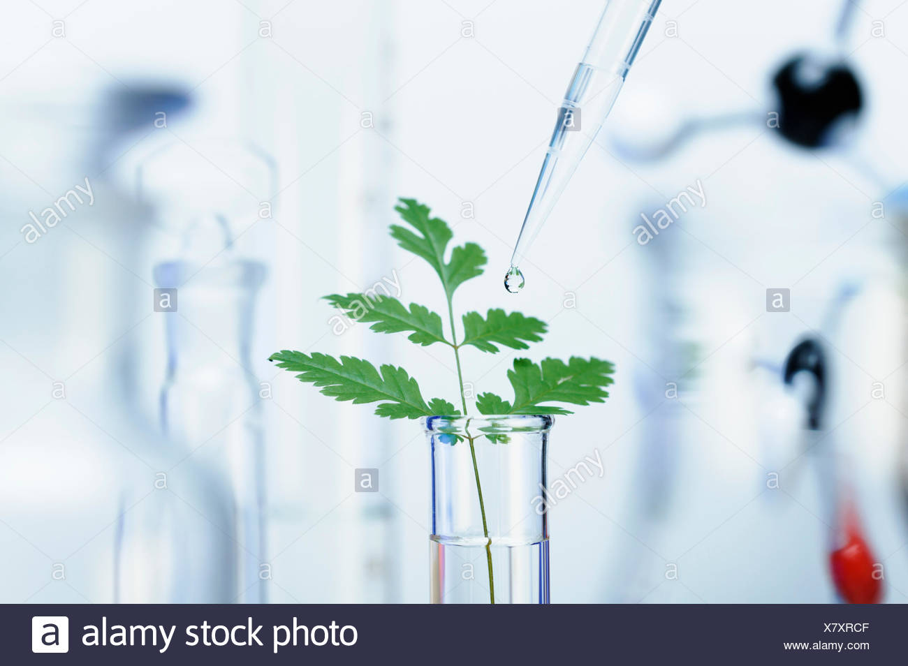 Biotechnology research precision micropipette - Stock Image
