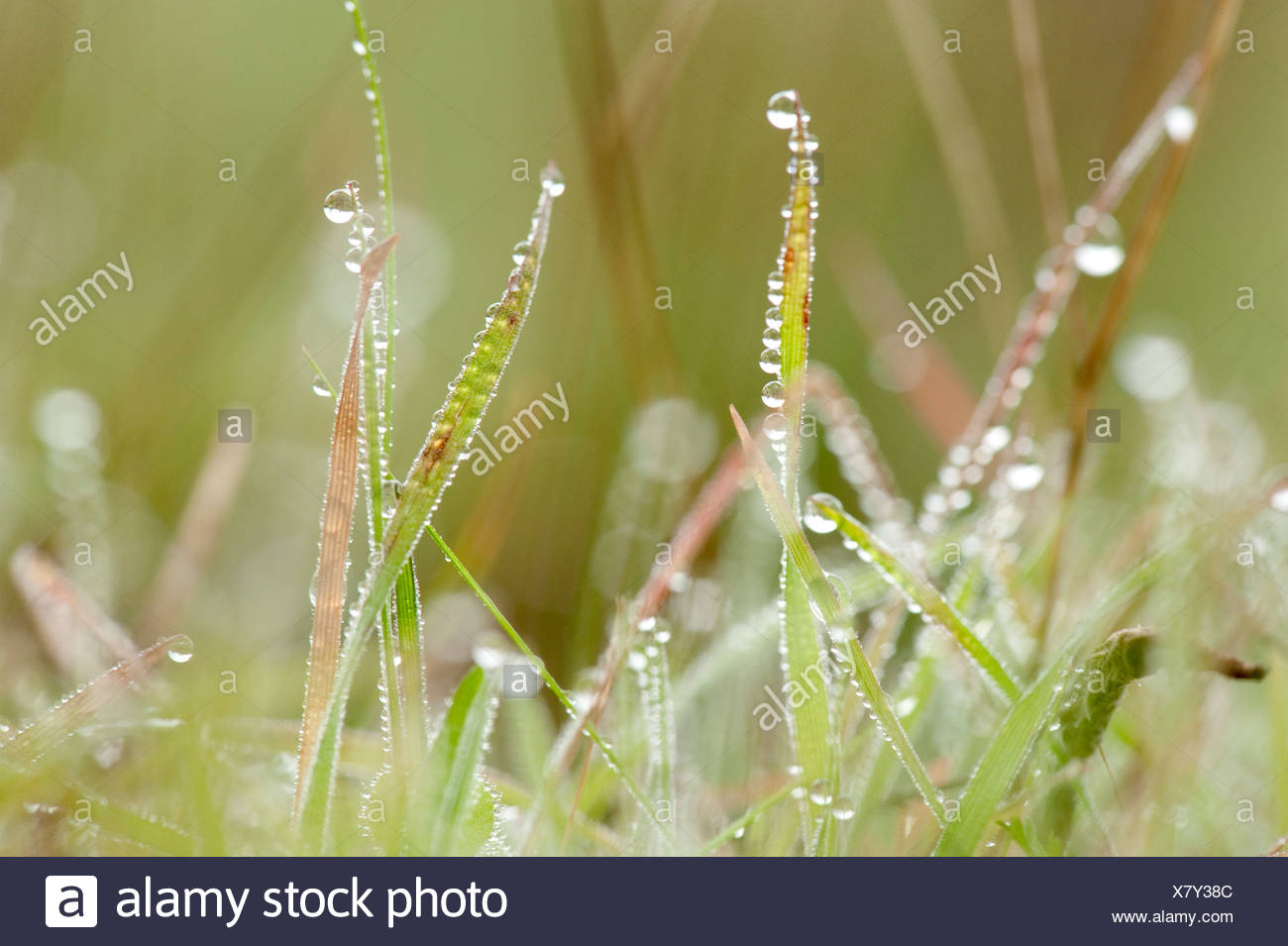 Grasses with early morning dew Andalucia Spain - Stock Image