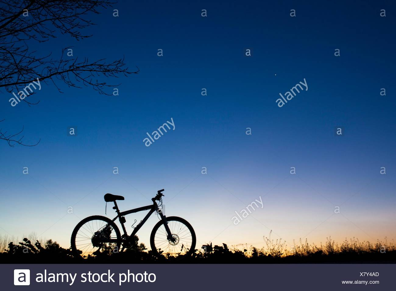 Silhouette of MTB bike at sunset under tree on blue sky with venus planet. - Stock Image