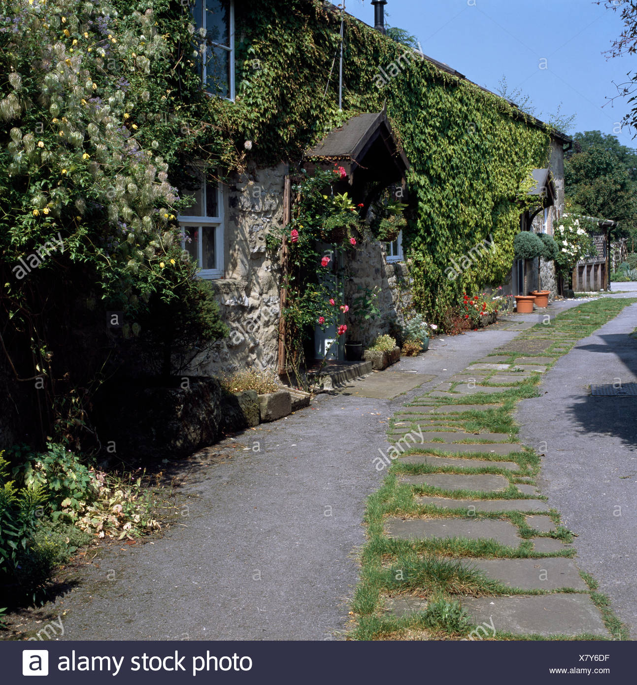 Exterior of a terraced stone cottage with climbing roses on the walls and on porch Stock Photo