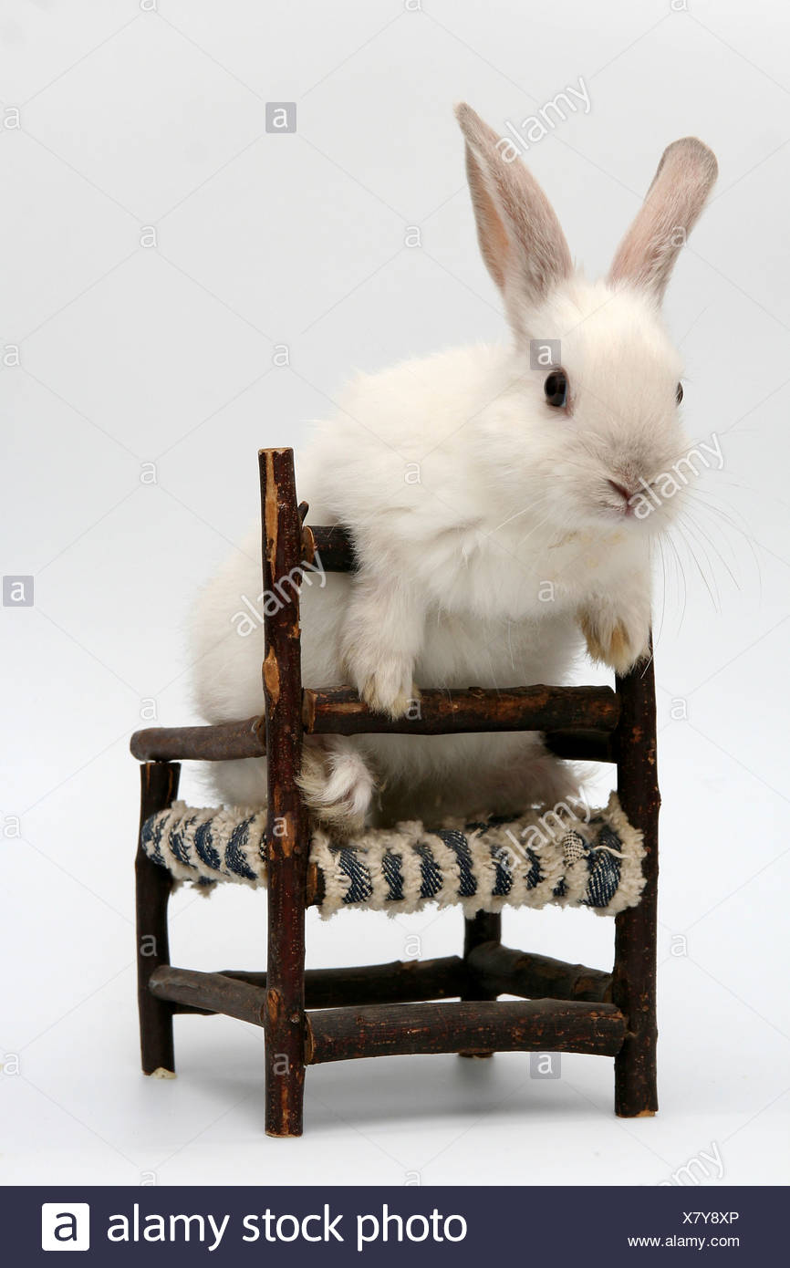 Cutout of a white rabbit on a chair on white background - Stock Image
