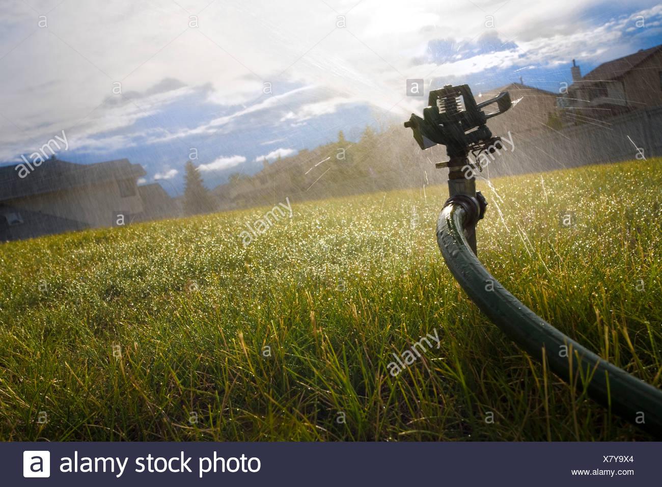 Sprinkler watering the lawn - Stock Image