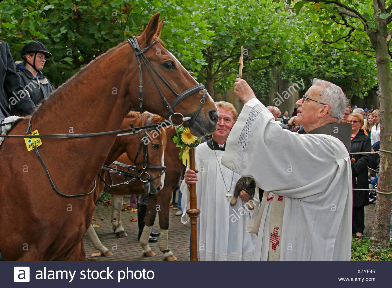catholic priest issues the blessing to riding horses, Germany, North Rhine-Westphalia, Velbert Neviges - Stock Image