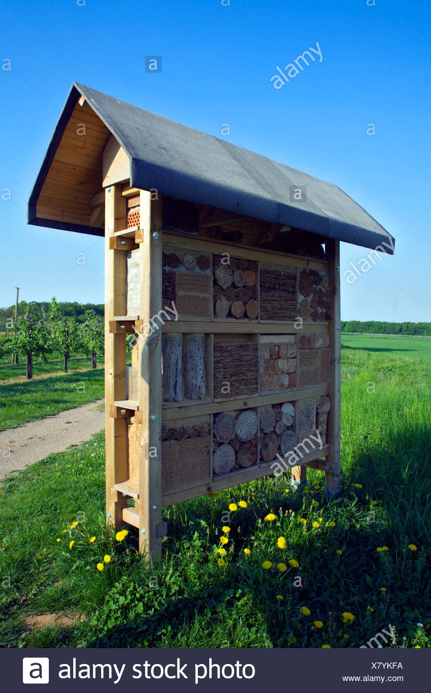 Nesting possibilities for Wild Bees - Stock Image