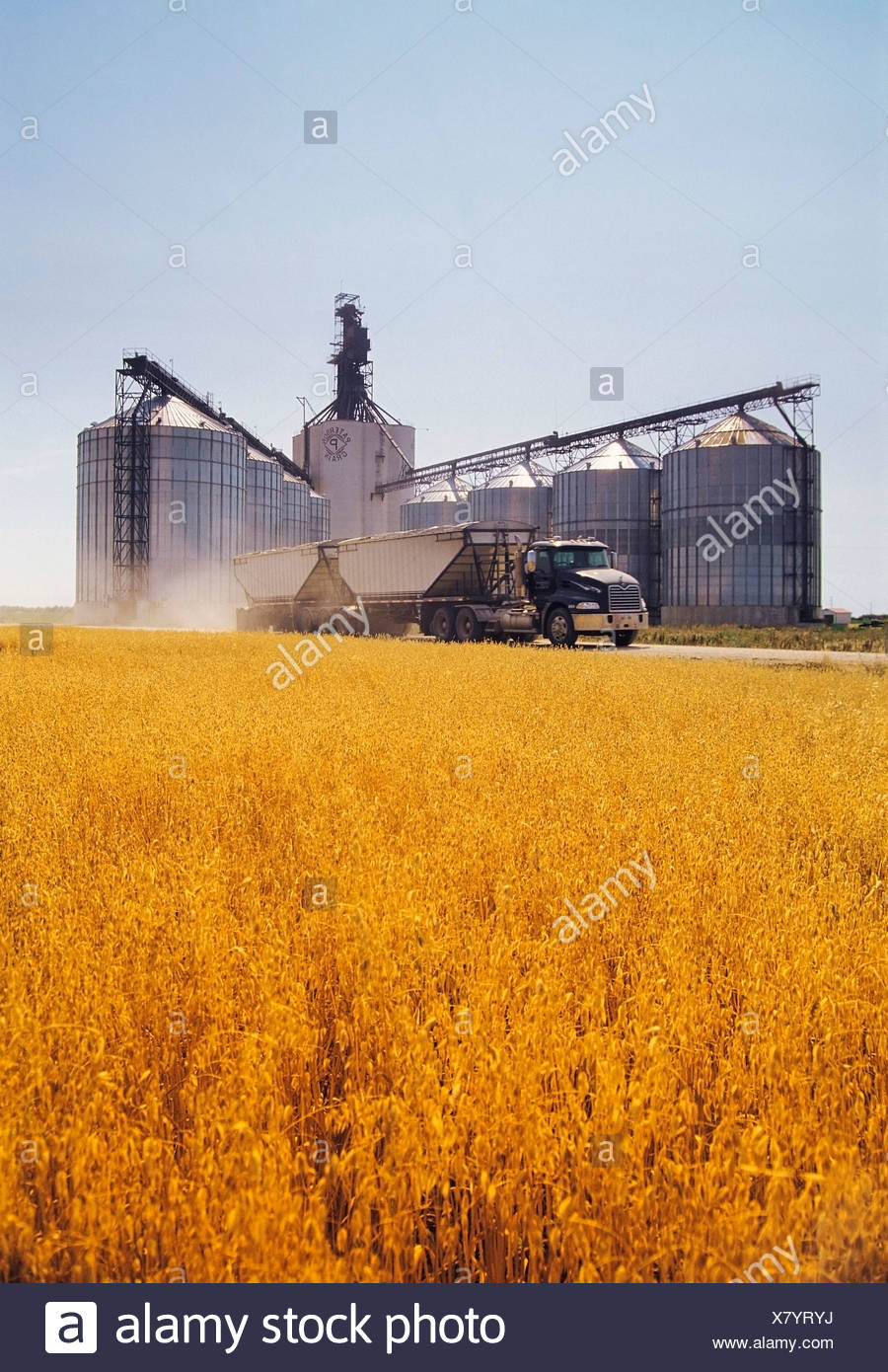 A truck leaving a Paterson inland grain terminal after delivering a load of grain, Morris, Manitoba, Canada - Stock Image