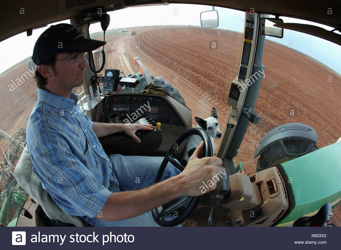 Agriculture - Young farmer with his dog in the cab driving his tractor in a cultivated field / Childress, Texas, USA. - Stock Image