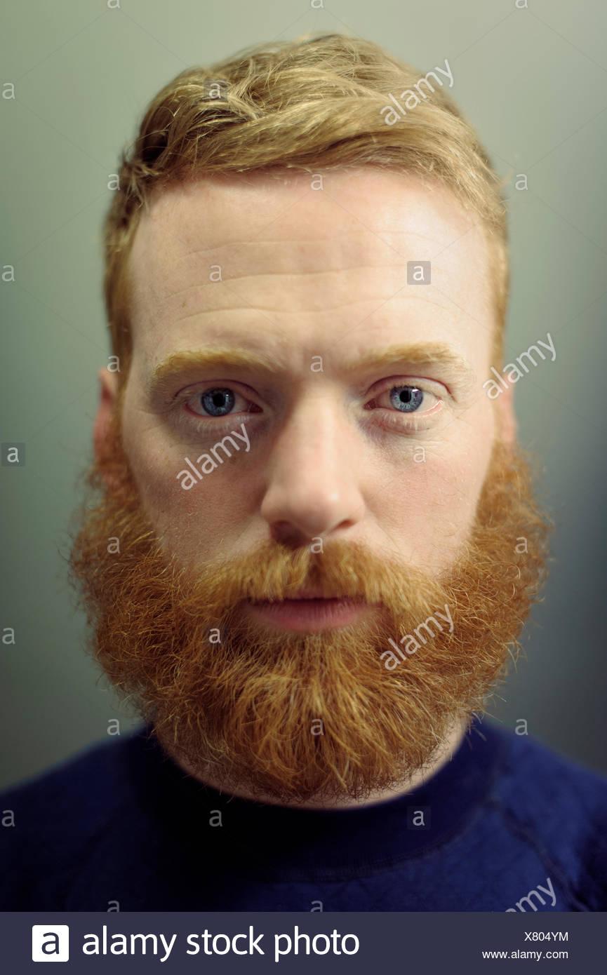 ginger bearded man stock photos ginger bearded man stock images