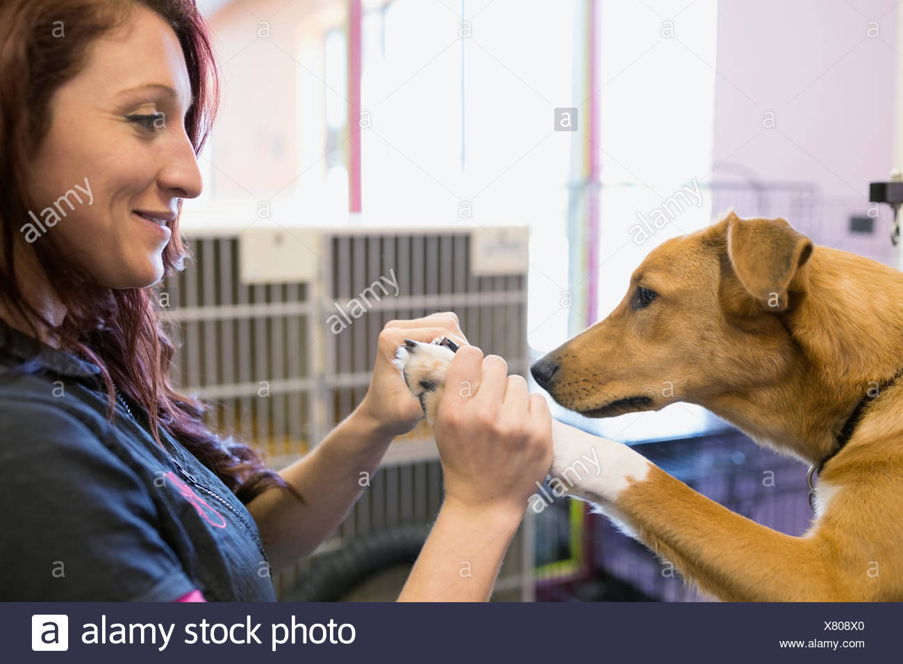 Dog groomer clipping dogs nails - Stock Image
