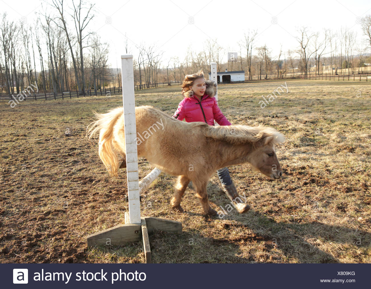 Young girl outdoors, guiding pony over bar - Stock Image