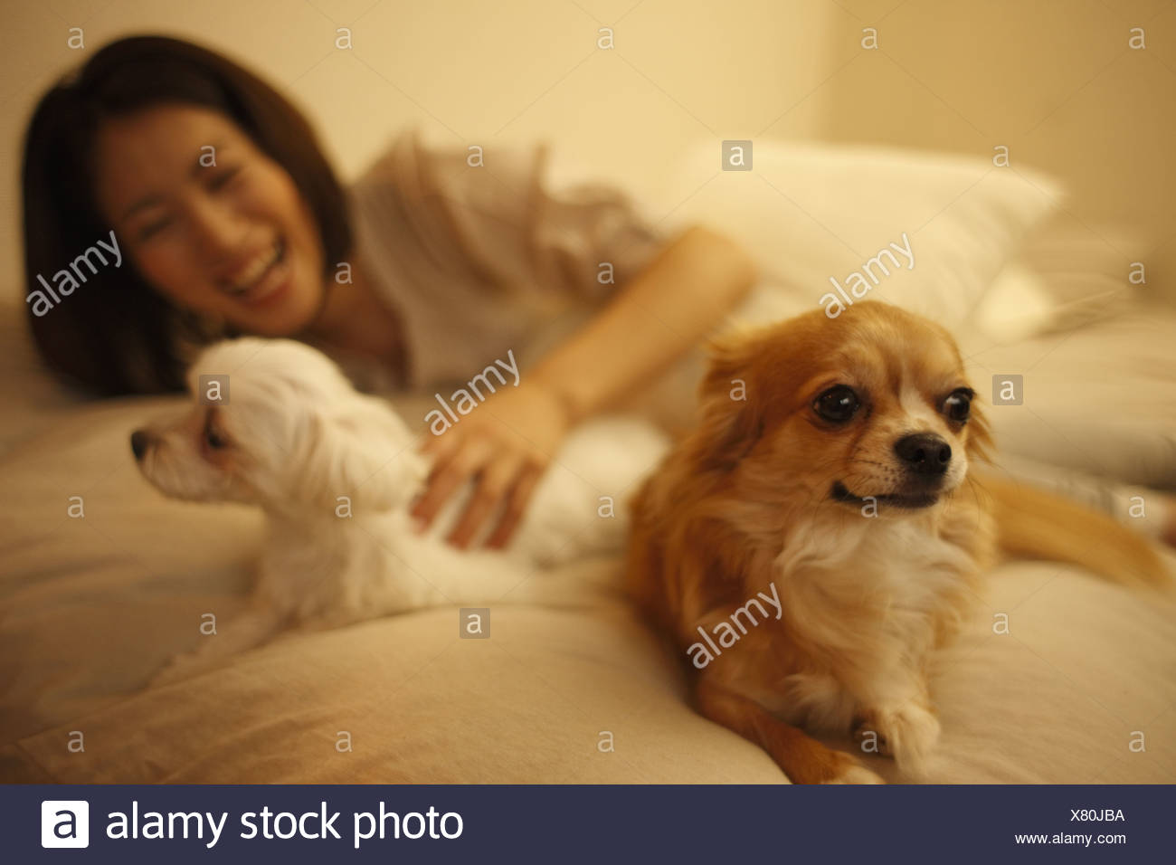 A woman and her dogs - Stock Image