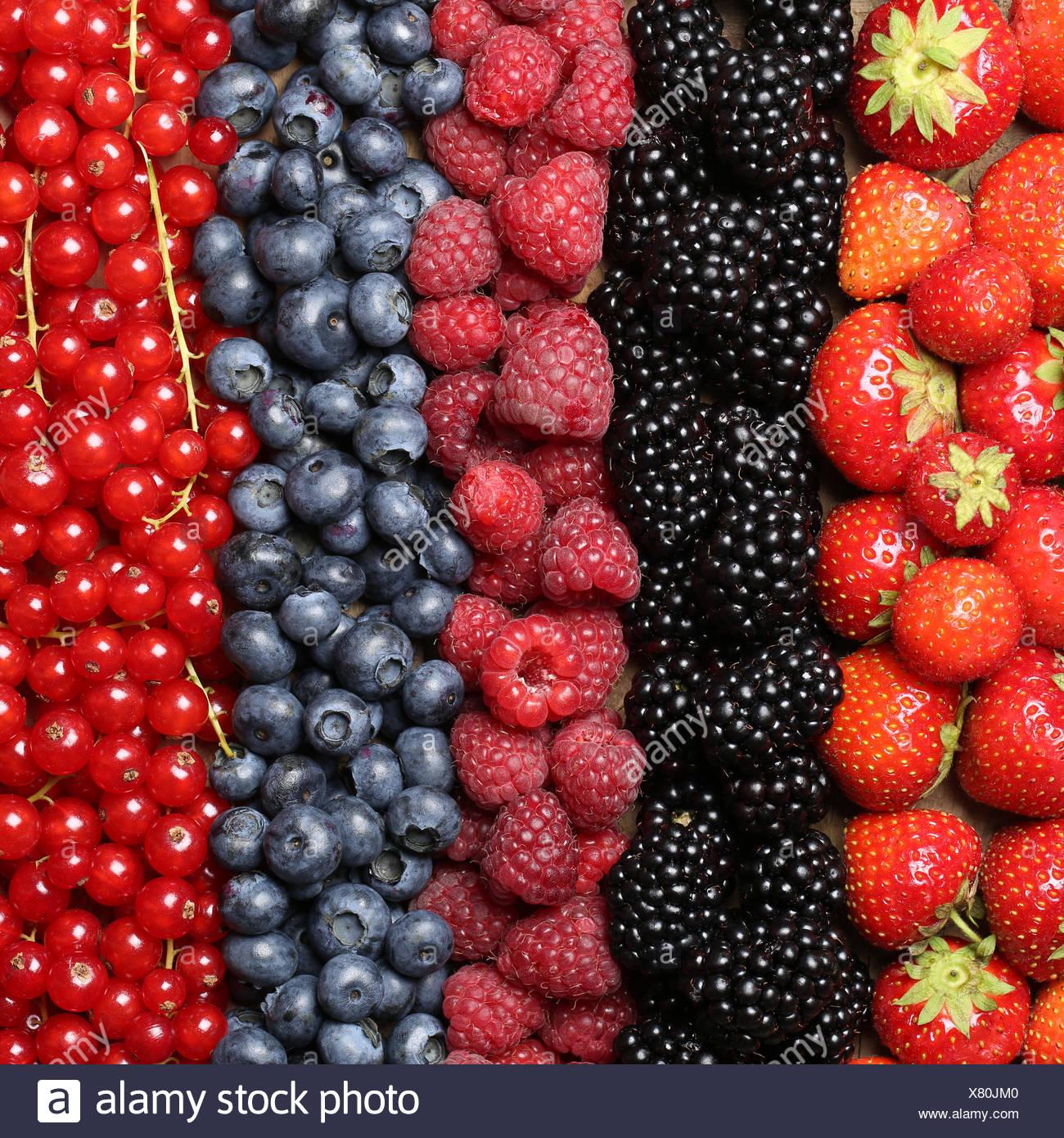 Frische Beeren Früchte wie Erdbeeren, Heidelbeeren, Himbeeren, Johannisbeeren und Brombeeren bilden einen Hintergrund Stock Photo
