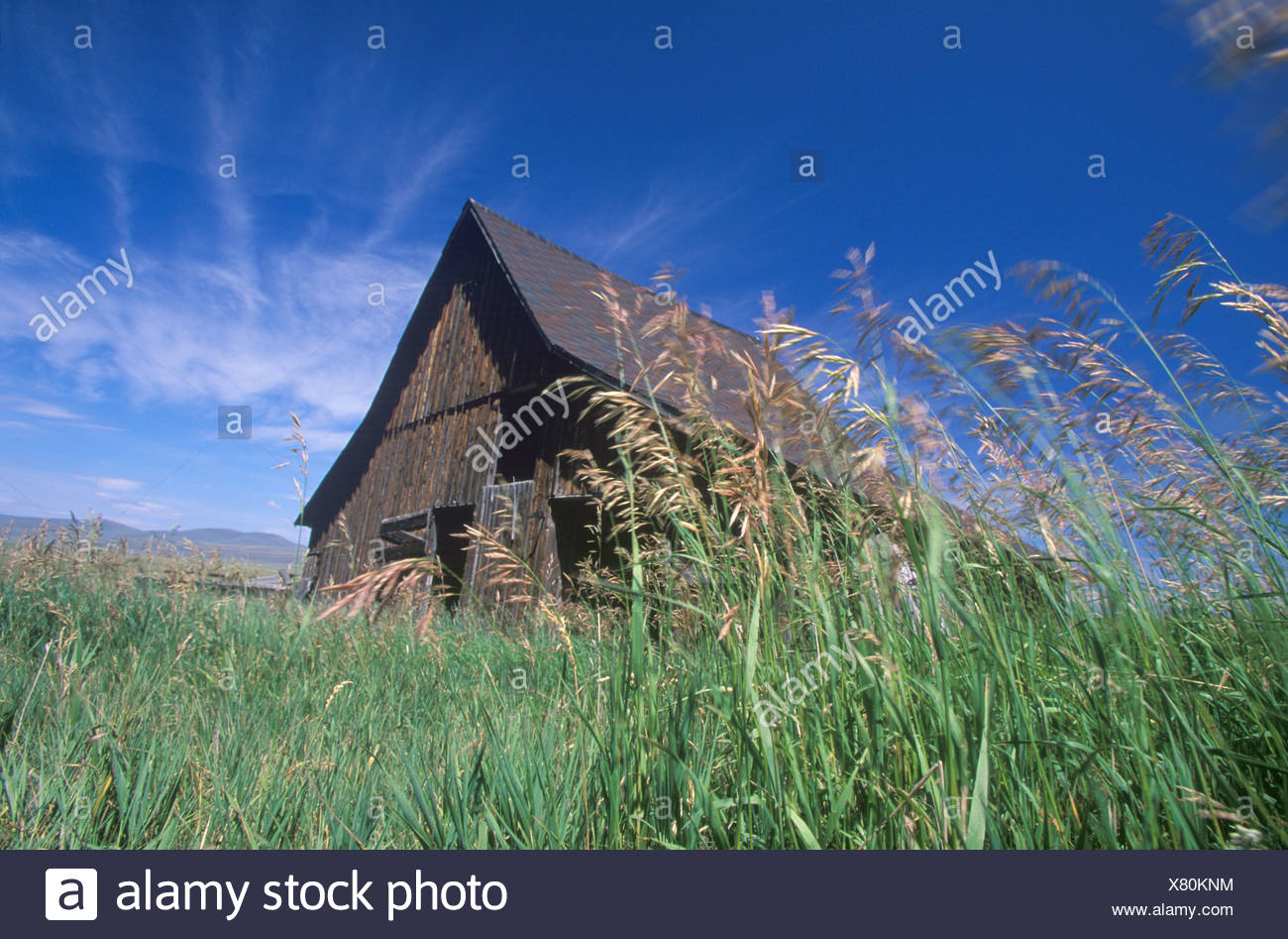 Barn on a breezy MT day - Stock Image