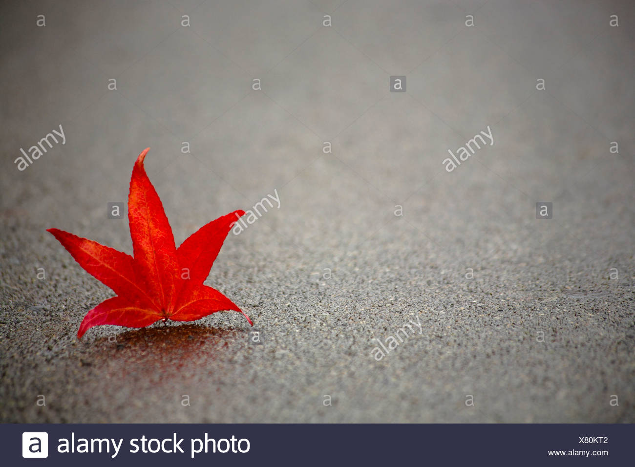 Red leaf on concrete - Stock Image