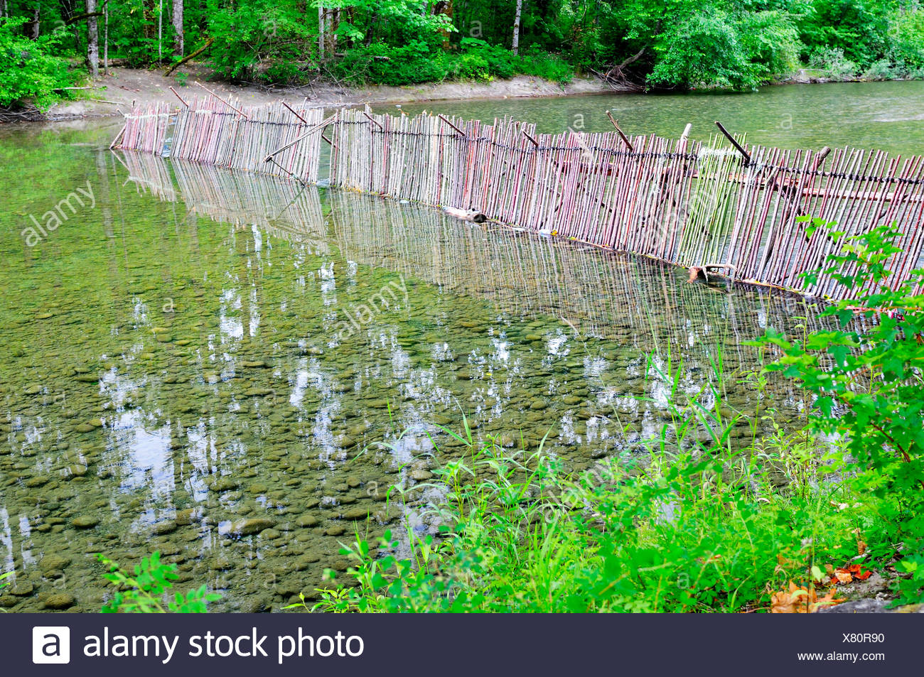 A First Nations fish weir across the Cowichan River near Duncan, BC. - Stock Image