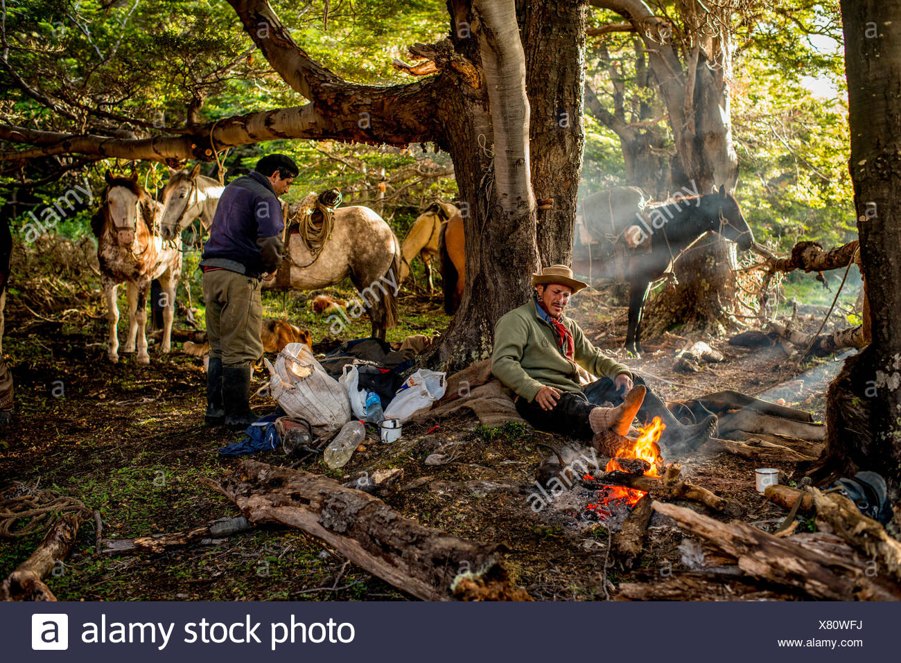 Bagualeros, cowboys who capture feral livestock, eat breakfast and load horses on a trip. - Stock Image