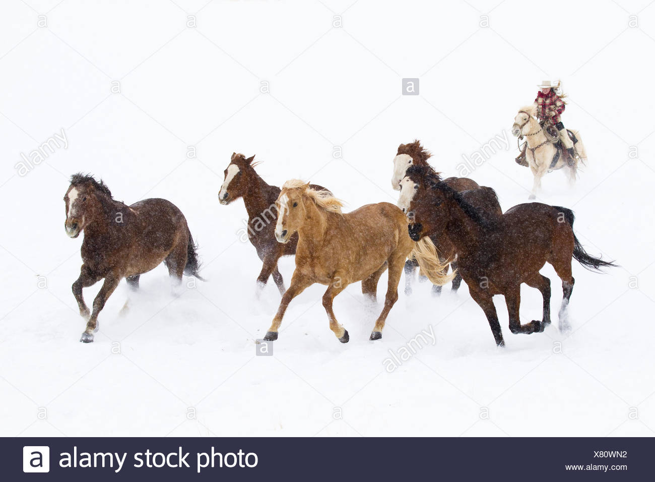 Cowboys drive a herd of horses through snow-covered pastures, Stock Photo