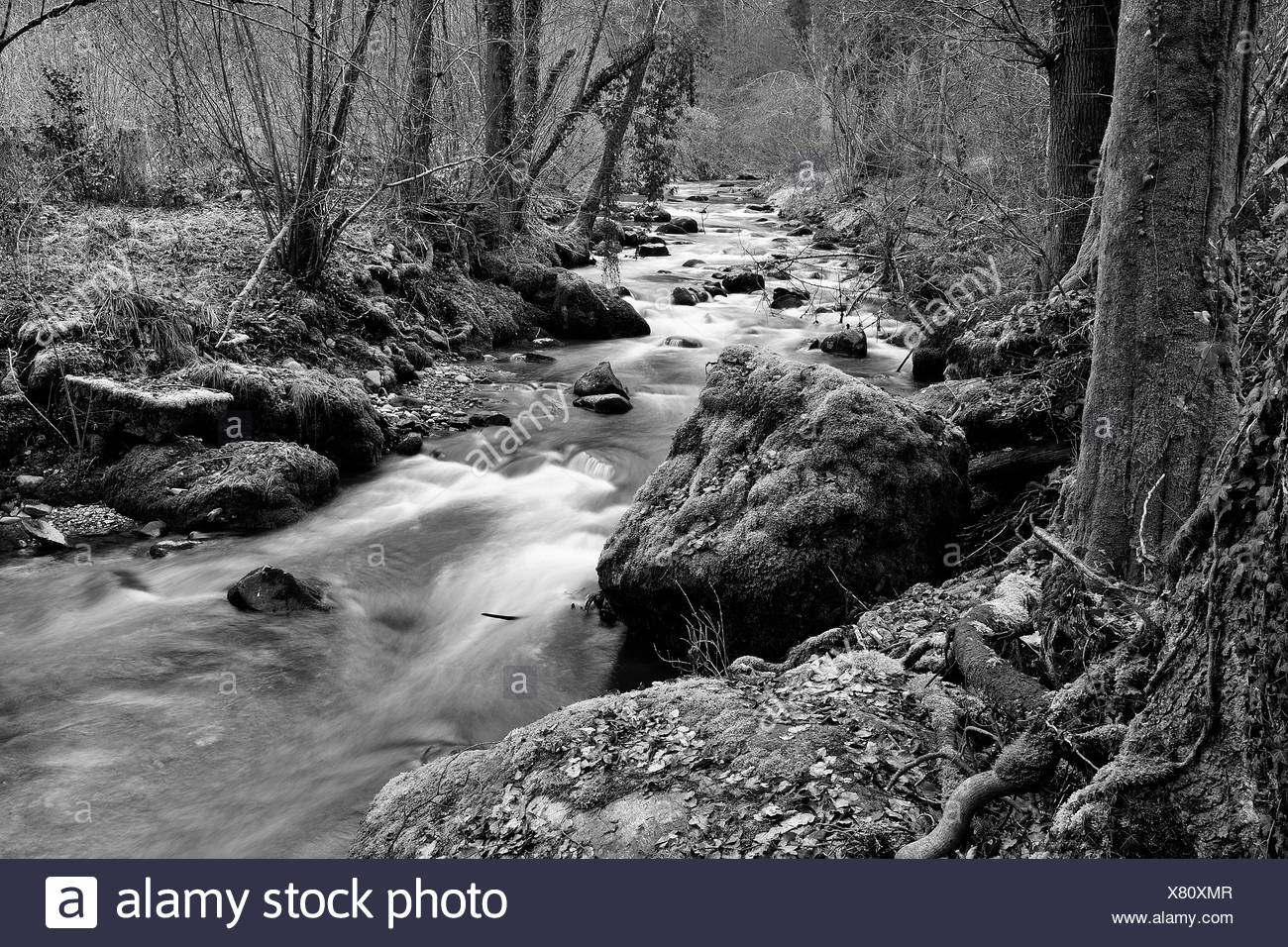 Jonen river undergrowth - Canton of Zurich Switzerland - Stock Image