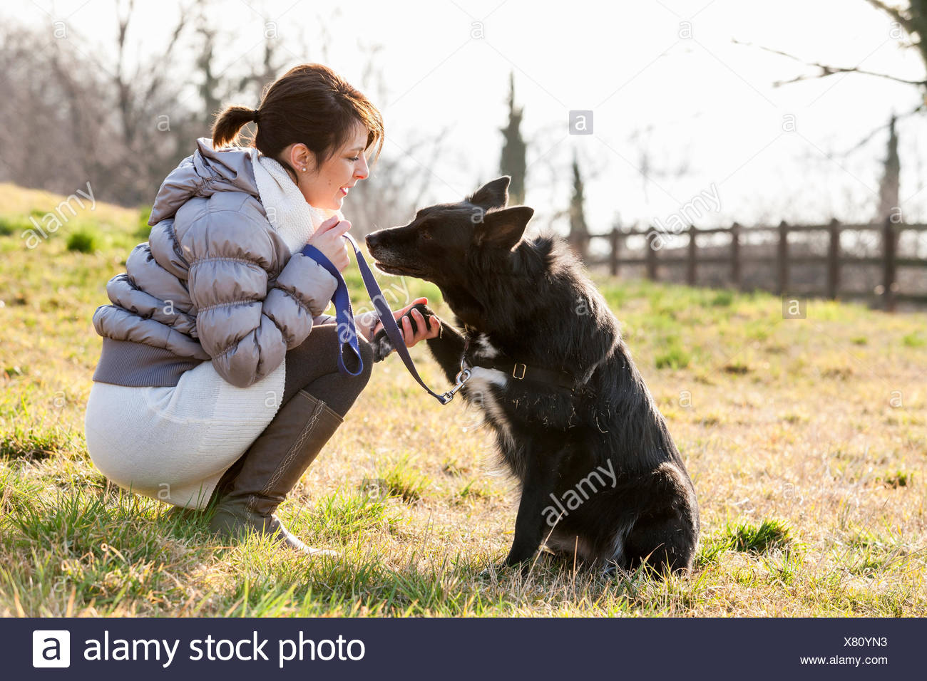 Mid adult woman training her dog to hold up paw in field - Stock Image