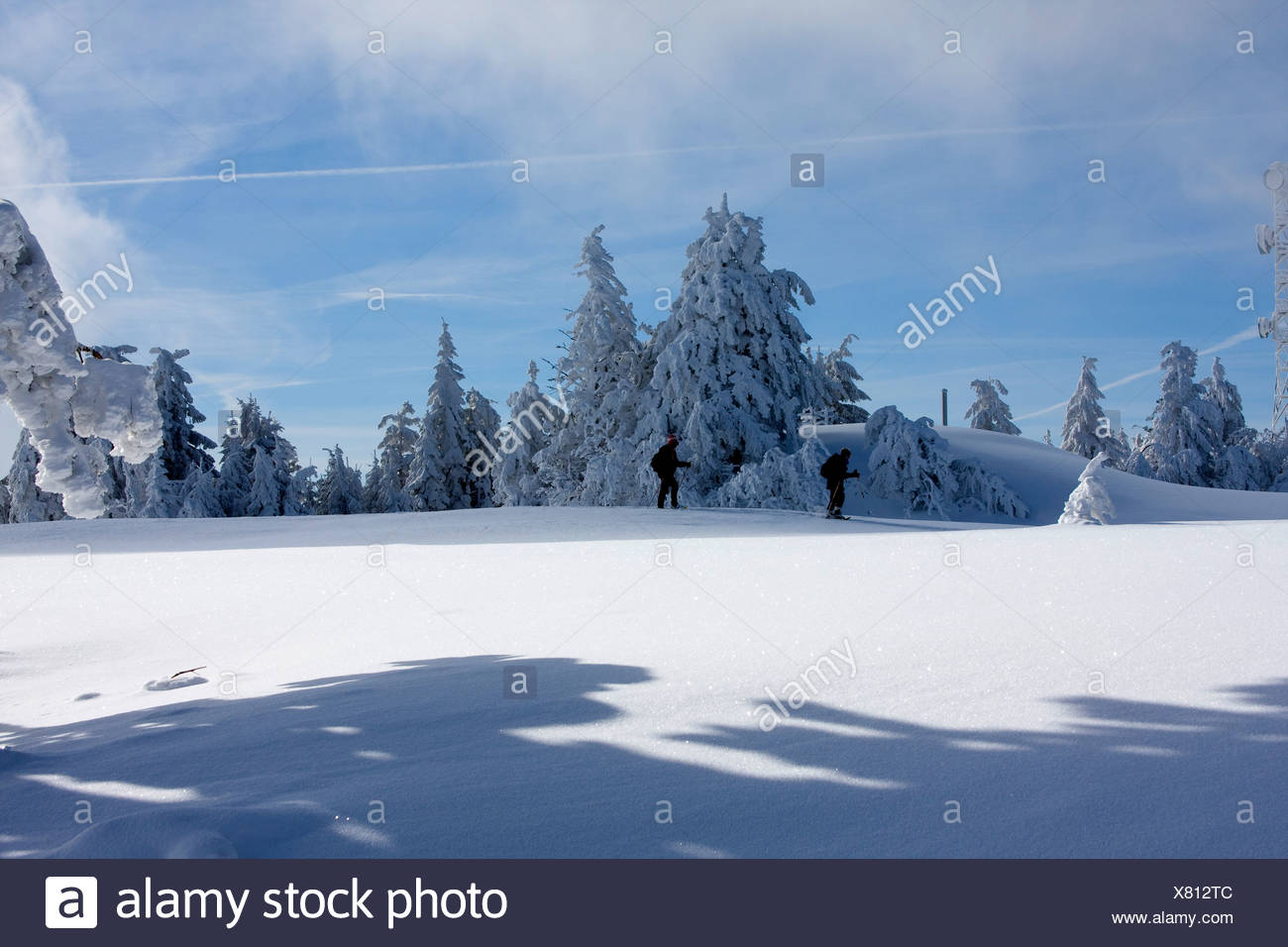 two wanderers in front of grove in a snow covered landscape at the Schwarzwaldhochstrasse, Germany, Baden-Wuerttemberg, Black Forest, Hornisgrinde Stock Photo