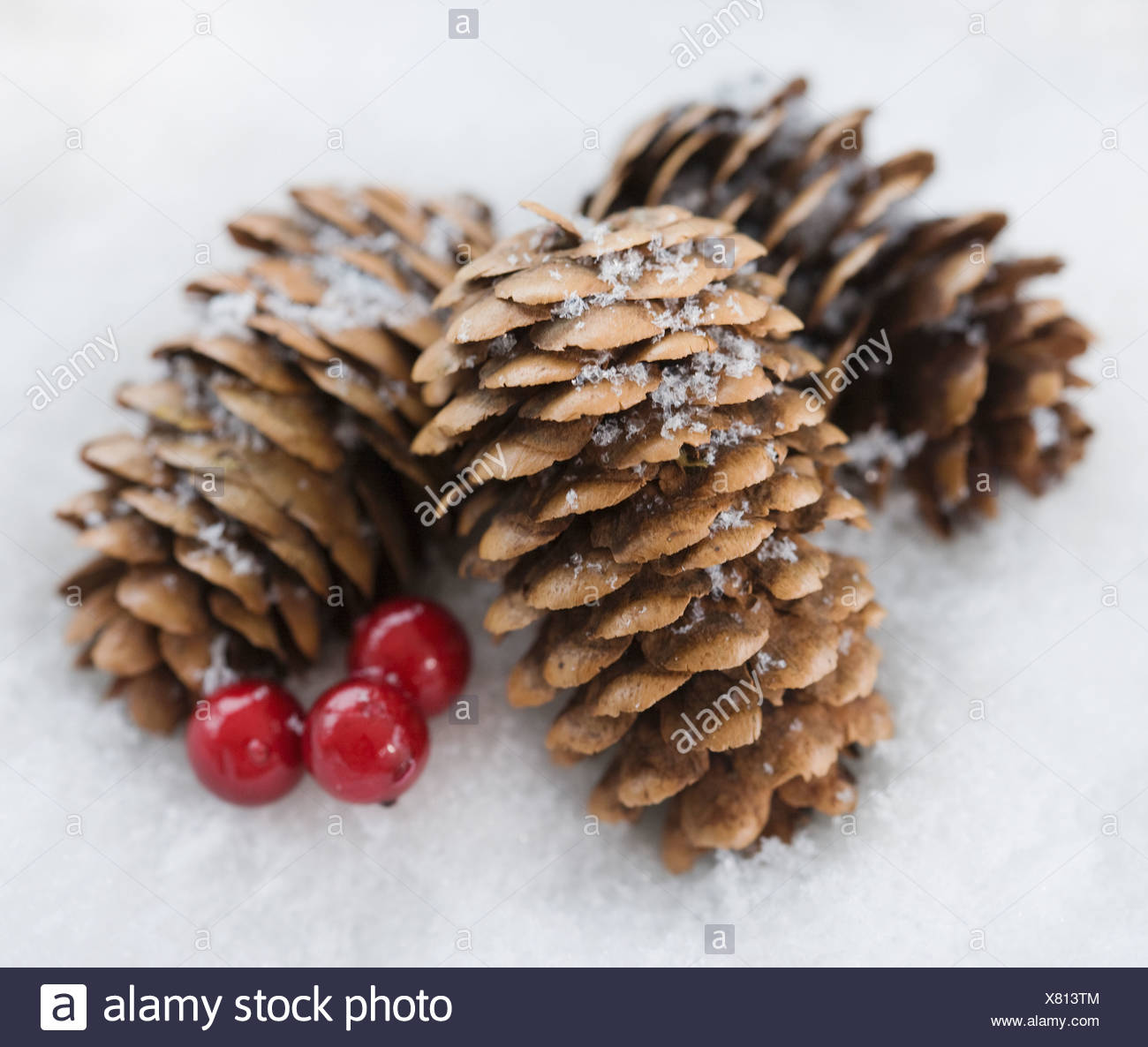 Close up of pinecones in snow - Stock Image