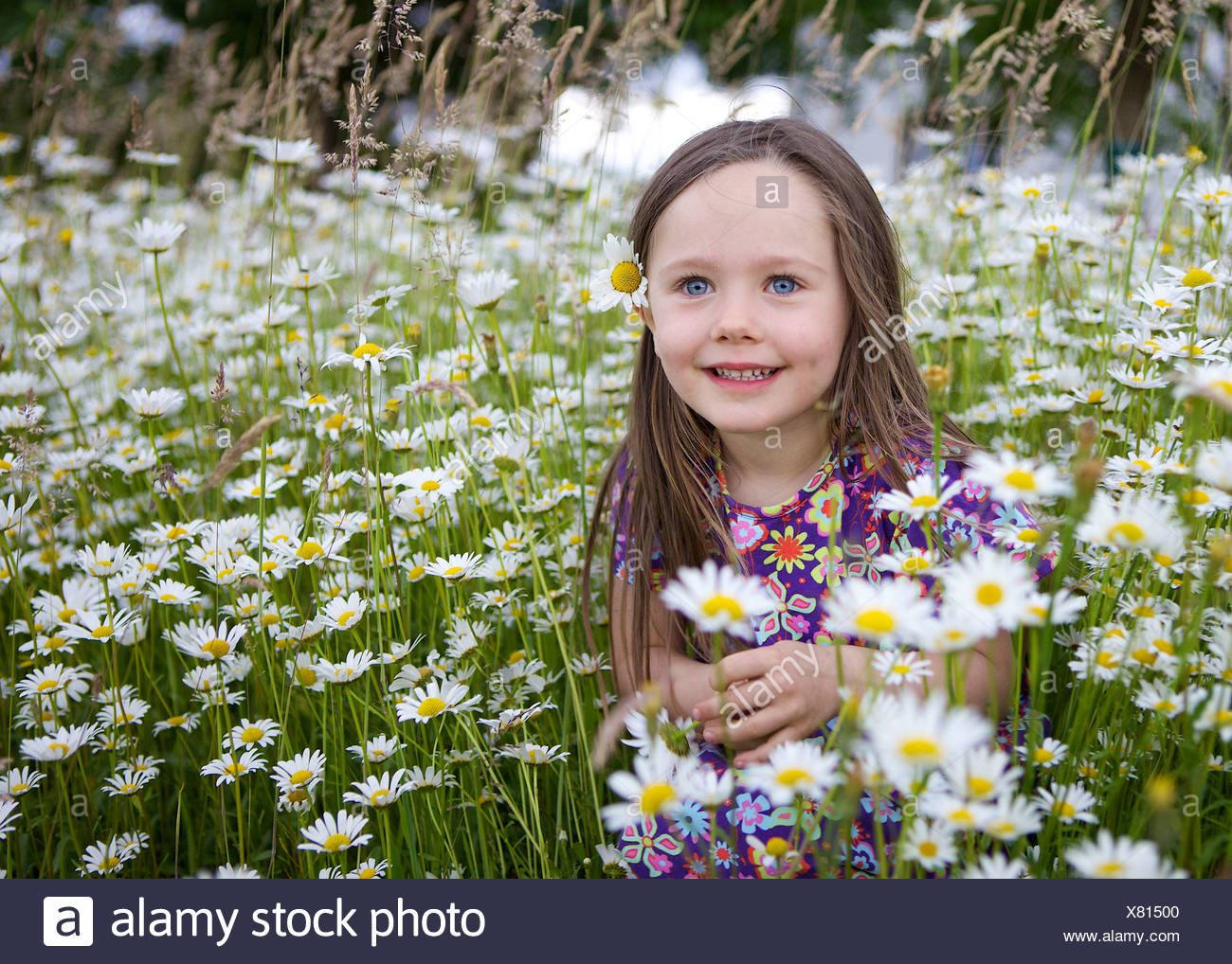 Little girl, three years, sitting in a flower meadow with many daisies, Rosenheim, Bavaria Stock Photo