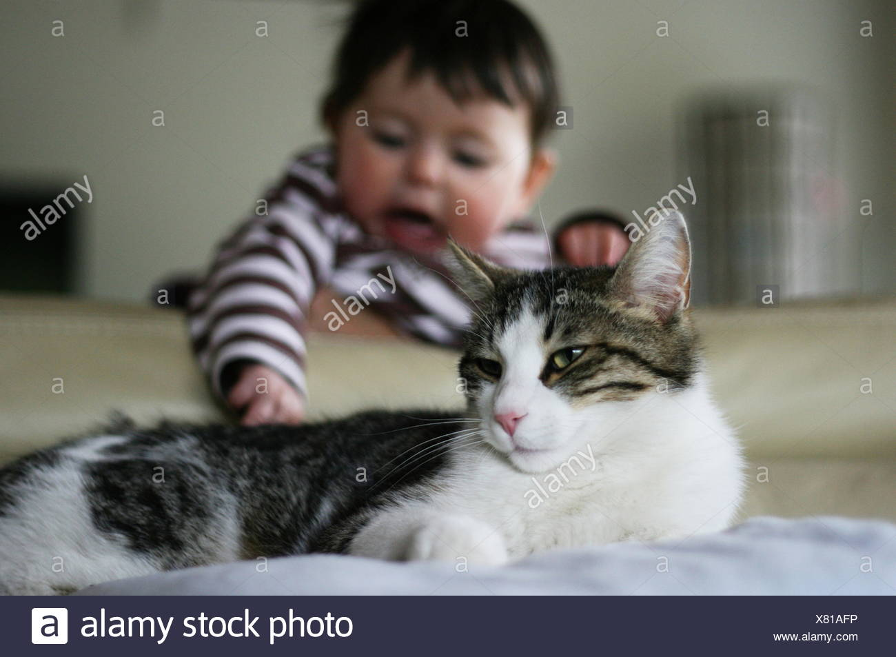 Baby (6-11 months) trying to catch cat tail Stock Photo