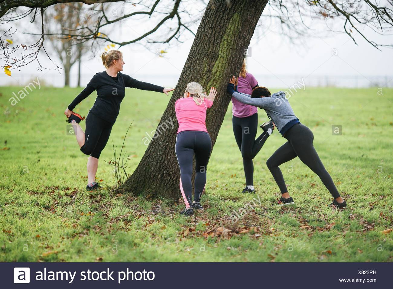 Women and teenager doing warm up exercises around park tree - Stock Image