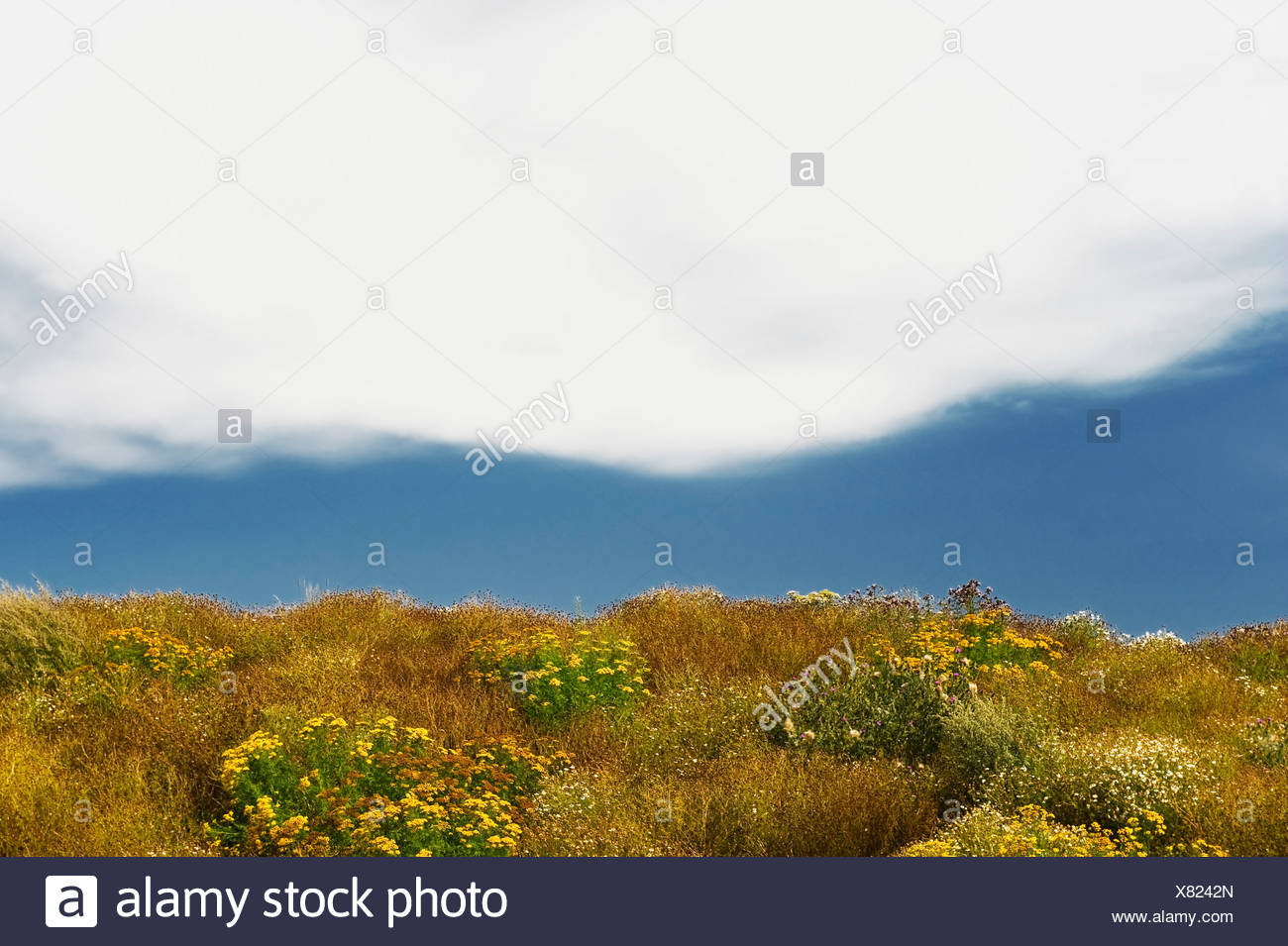 Flowery meadow over blurred background - Stock Image