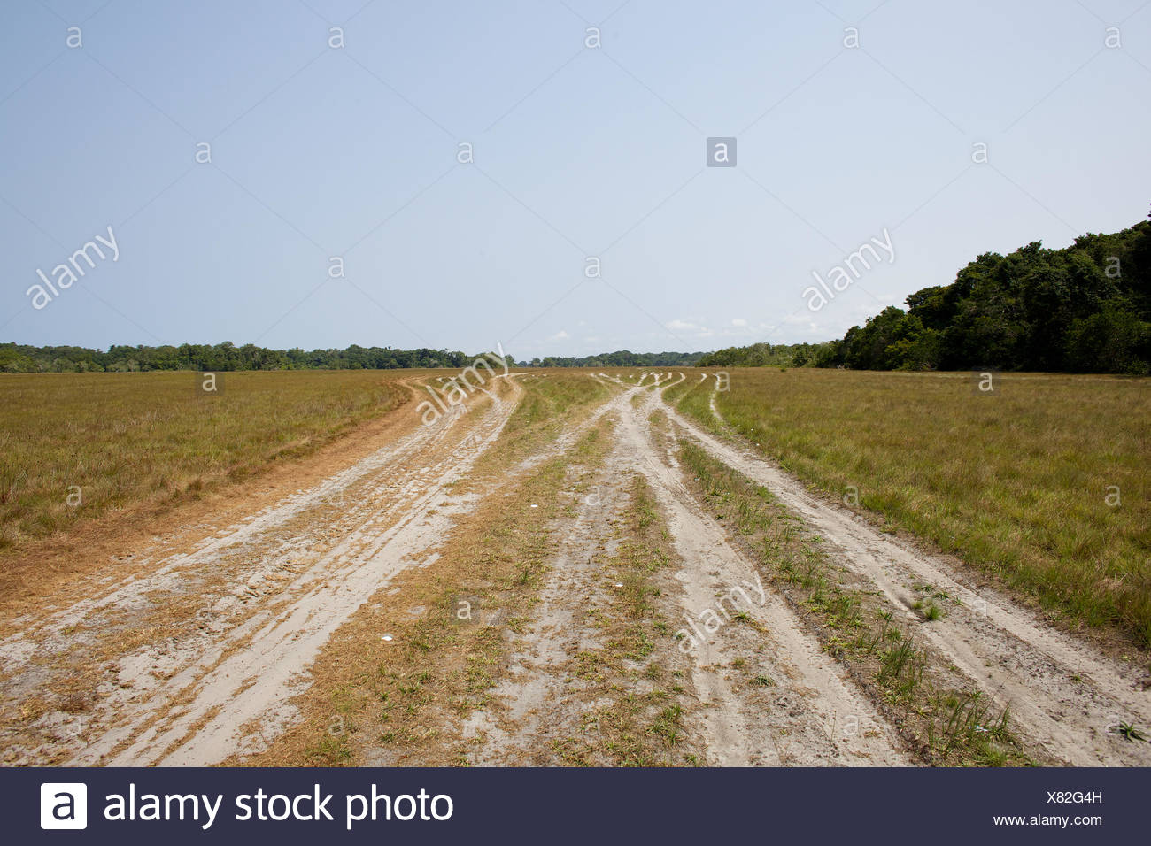 The impact caused by trucks driving in the savanna. - Stock Image