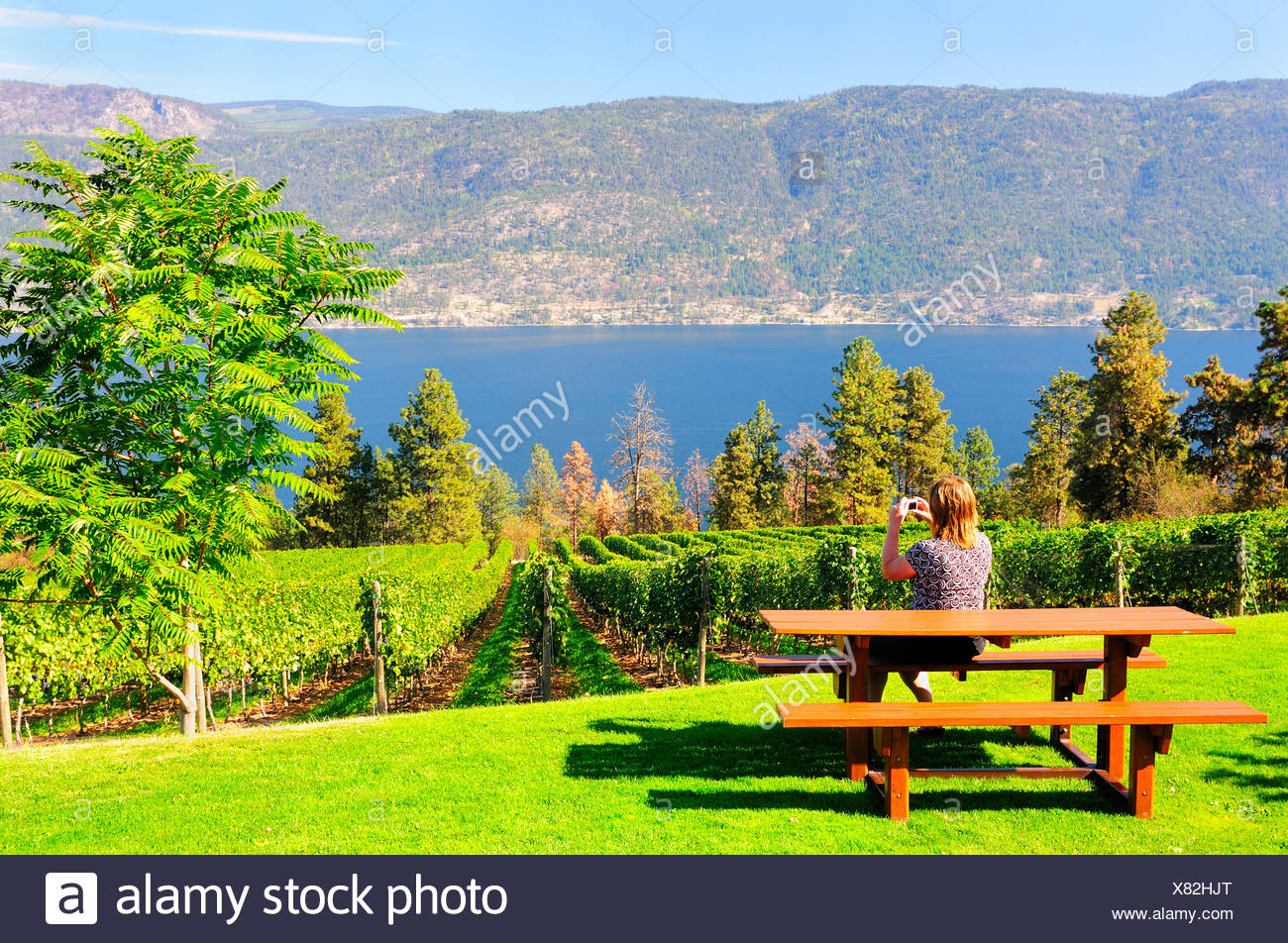 Woman taking pictures Arrowleaf Cellars vineyard & Woman taking pictures Arrowleaf Cellars vineyard Stock Photo ...