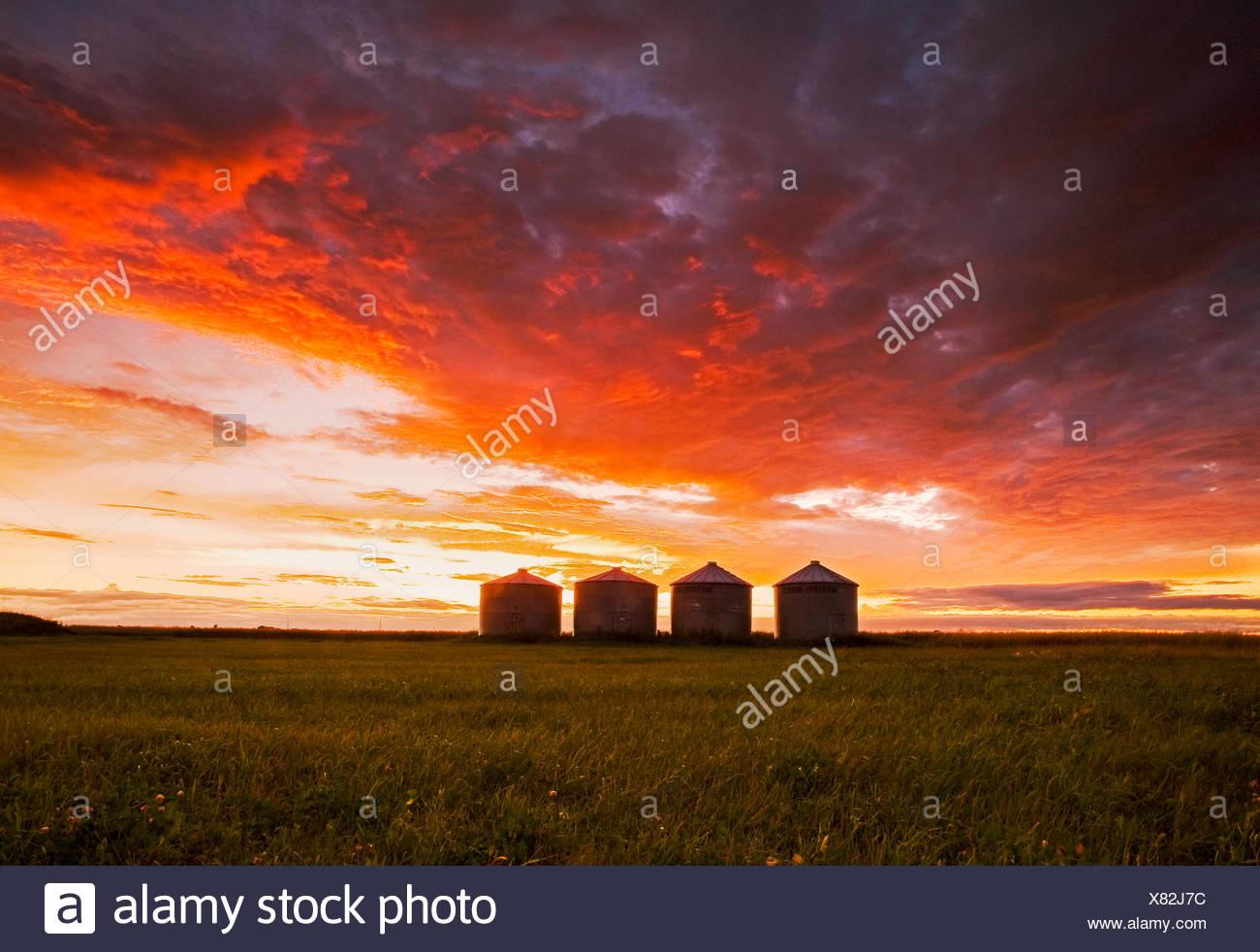 grain storage bins at sunset, near Carey,  Manitoba, Canada - Stock Image