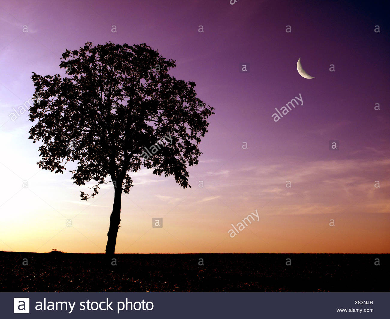 Crescent moon and tree at dusk - Stock Image