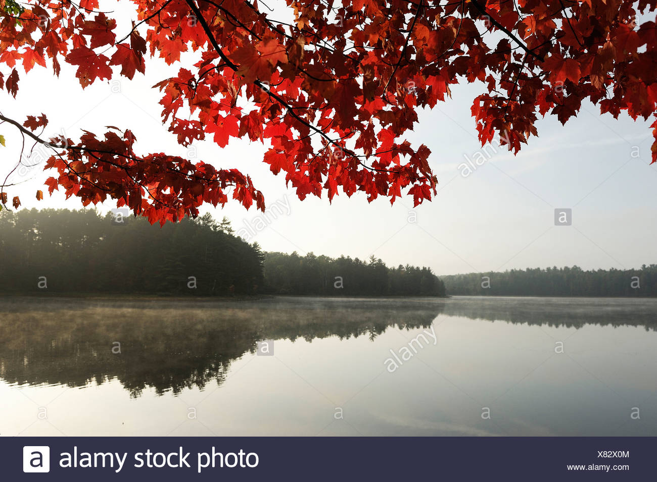 Starrett Lake Northern Highland American Legion State Forest Wisconsin USA America United States of America lake forest trees - Stock Image